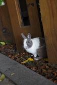 16199776兔子波波日式寫真:CRW_5282.JPG