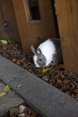 16199776兔子波波日式寫真:CRW_5283.JPG