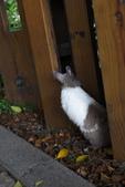 16199776兔子波波日式寫真:CRW_5285.JPG