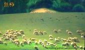 生活週遭:綿羊風景.jpg