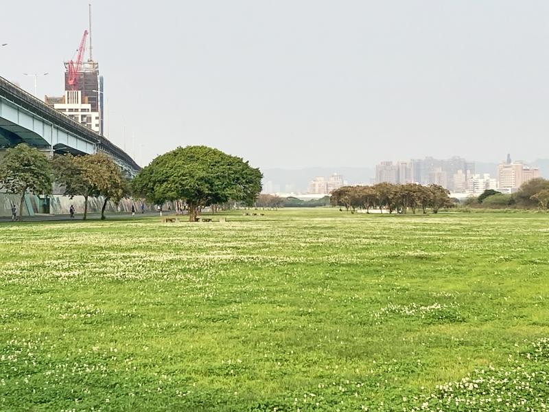 1-白花三葉草.JPG - 東眼山團練趣