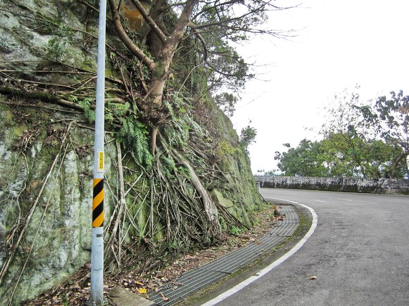 12-榕樹岩壁.JPG - 大凍山單騎