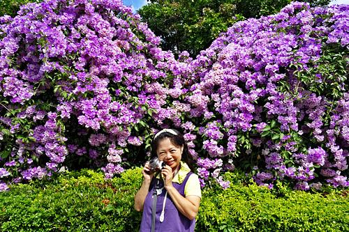 6 (4)_meitu_11.jpg - 👒十月。好。浪漫~紫色花瀑《蒜香藤》