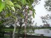 980528羅東林場員山酒廠漁場外澳旅遊中心:P1040494.jpg