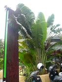 1010130宜蘭綠海員山公園宜蘭年礁溪源來如池:P1130591.JPG