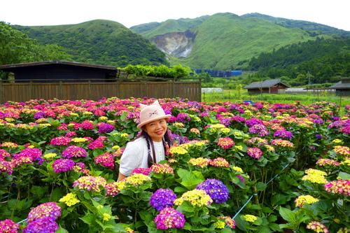 43.jpg - 初夏花語~滿懷希望,滿心歡喜。繡球花