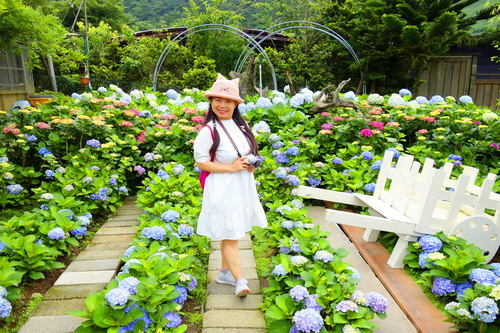62.JPG - 初夏花語~滿懷希望,滿心歡喜。繡球花