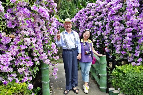 2_meitu_2.jpg - 👒十月。好。浪漫~紫色花瀑《蒜香藤》