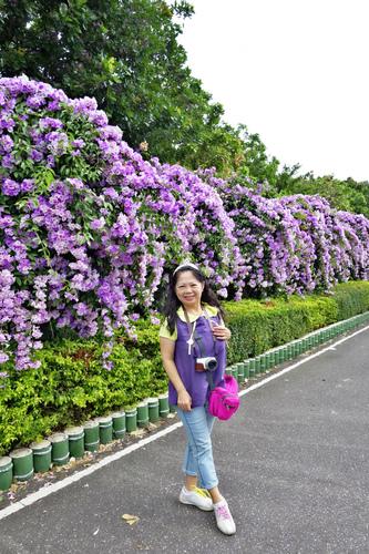 7_meitu_14.jpg - 👒十月。好。浪漫~紫色花瀑《蒜香藤》