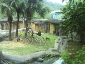 090526_901動物園跑跑:1496756397.jpg