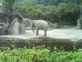 090526_901動物園跑跑:1496756400.jpg