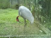 090526_901動物園跑跑:1496756403.jpg