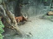 090526_901動物園跑跑:1496756405.jpg