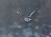 雪地拍鳥:DSC_8902.jpg