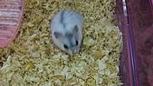 歡樂〃YMCA:可愛的老鼠ˇ