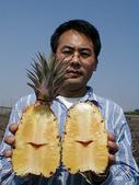實用的資訊:甘蔗鳳梨斷心嚴重圖二.jpg