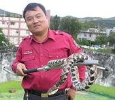 鄉野軼聞區:罕見百步蛇1.jpg