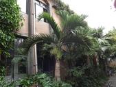 2015植物攝影11A:酒瓶椰子 (@台灣大學) (104.10.21拍攝) (5).JPG