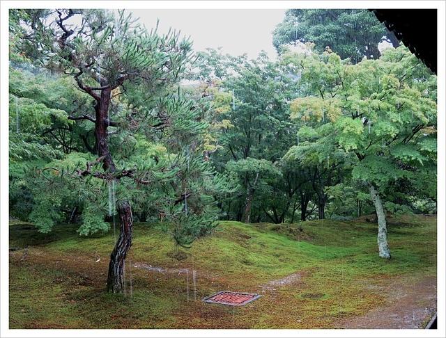 IMG_6955.JPG - 2017-06-21 東福寺