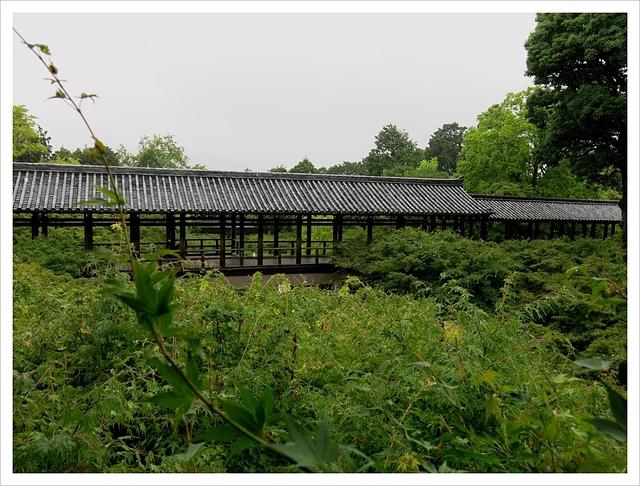 IMG_7083.JPG - 2017-06-21 東福寺