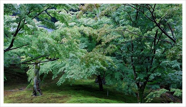 IMG_7036.JPG - 2017-06-21 東福寺