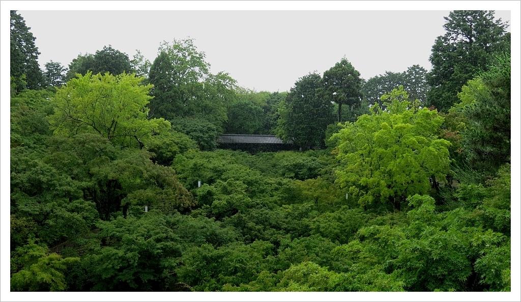 2017-06-21 東福寺:IMG_7043.JPG