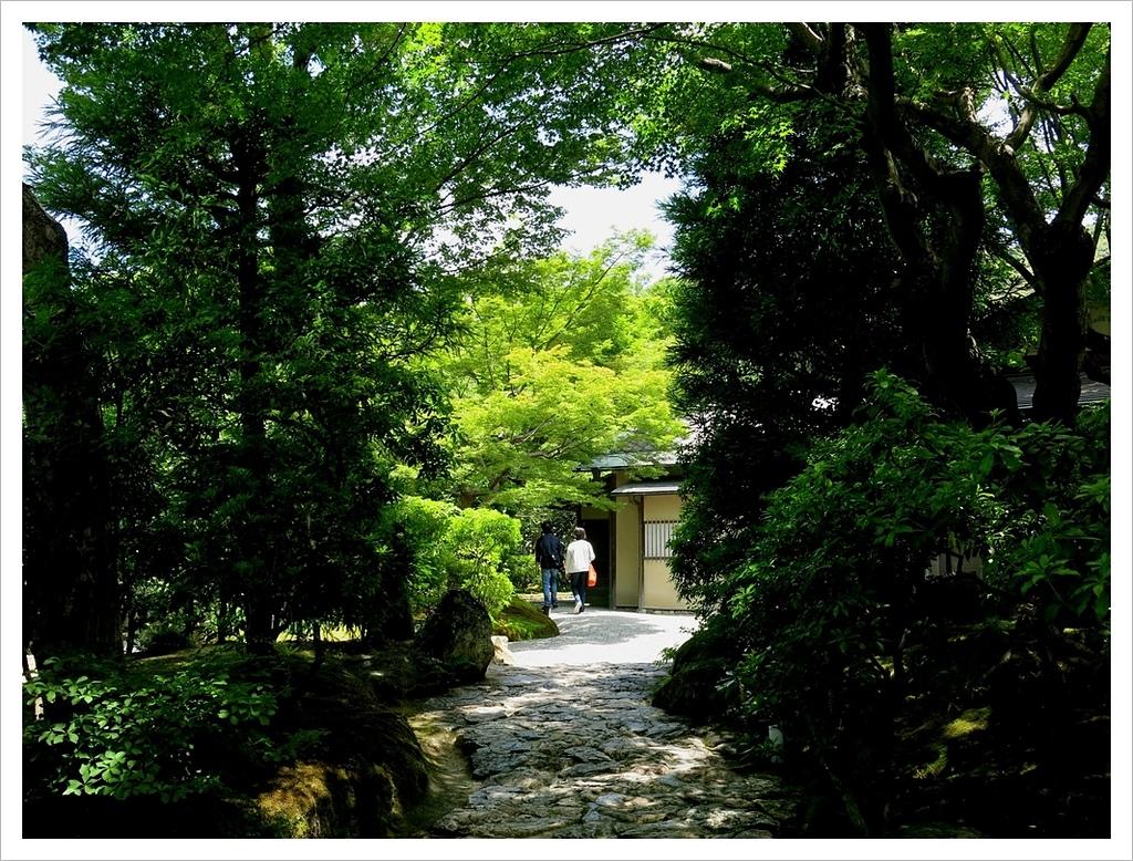 2017-06-17 高台寺:IMG_6015.JPG