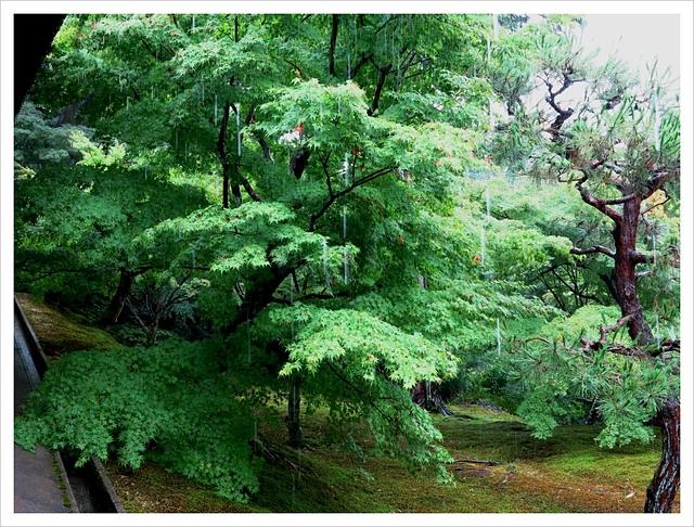 IMG_6953.JPG - 2017-06-21 東福寺