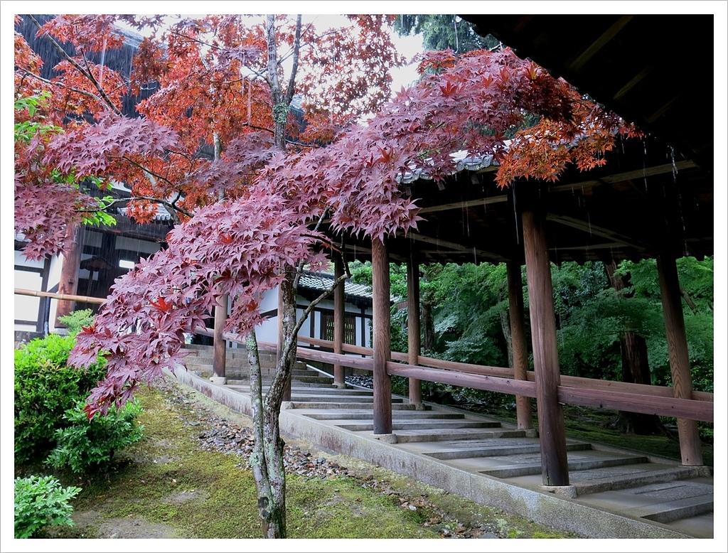 2017-06-21 東福寺:IMG_6963.JPG