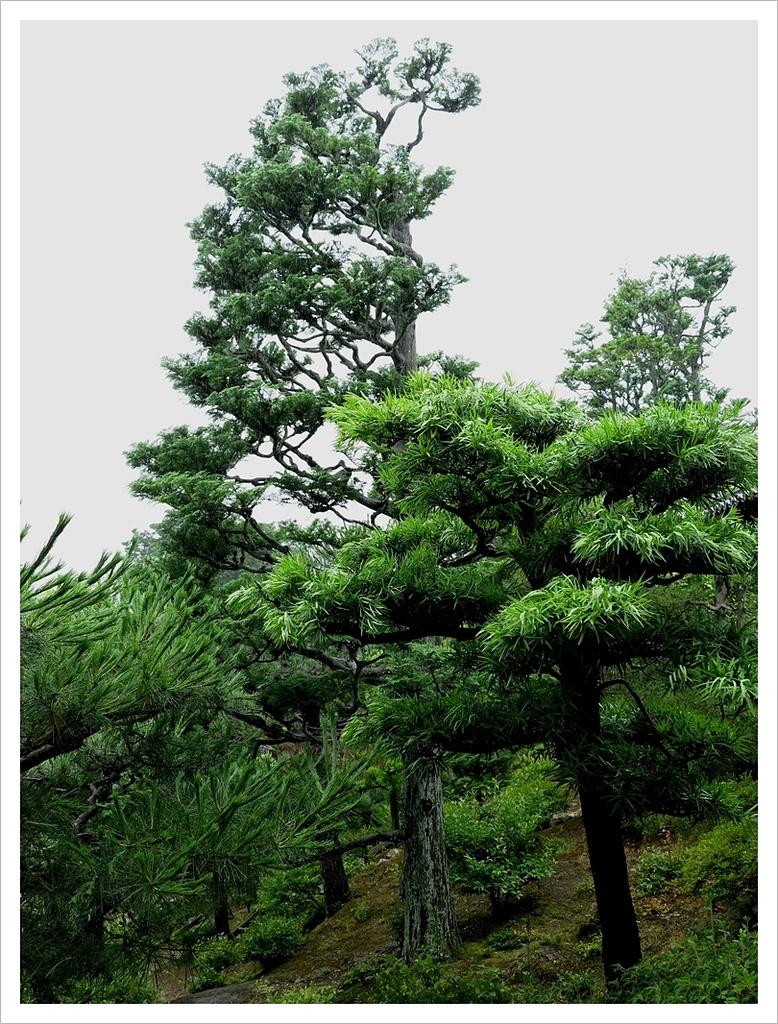 2017-06-21 東福寺:IMG_7022.JPG