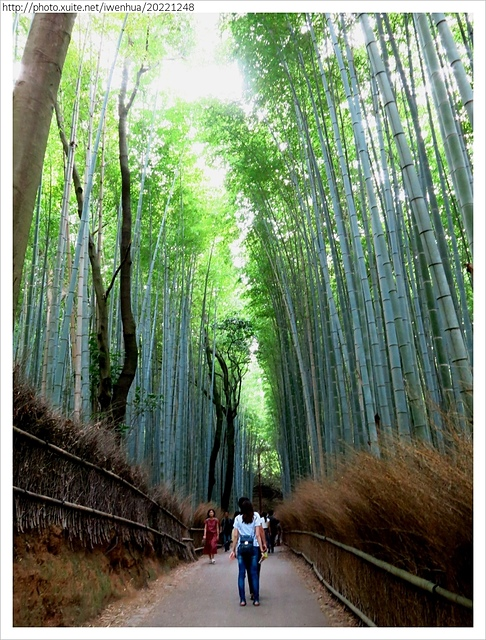 IMG_6457.JPG - 2017-06-18 嵐山-天龍寺-竹林