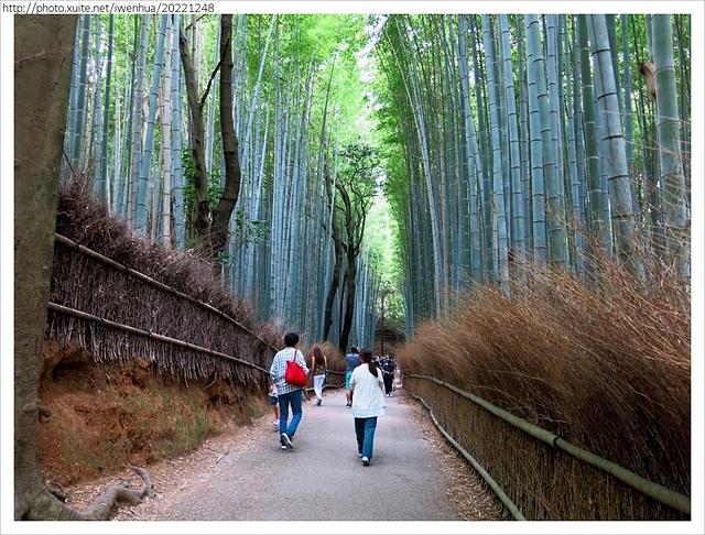 IMG_6268.JPG - 2017-06-18 嵐山-天龍寺-竹林