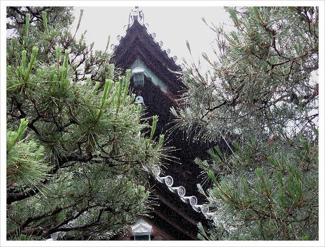 IMG_7093.JPG - 2017-06-21 東福寺