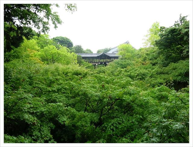 IMG_6822.JPG - 2017-06-21 東福寺