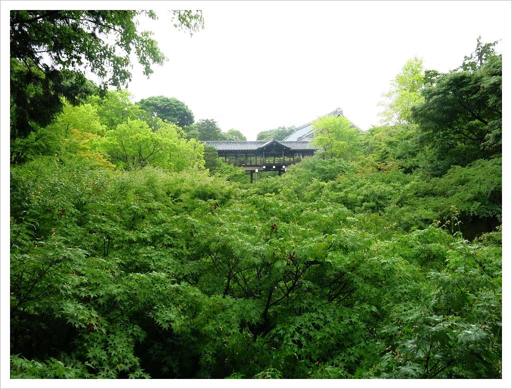 2017-06-21 東福寺:IMG_6822.JPG