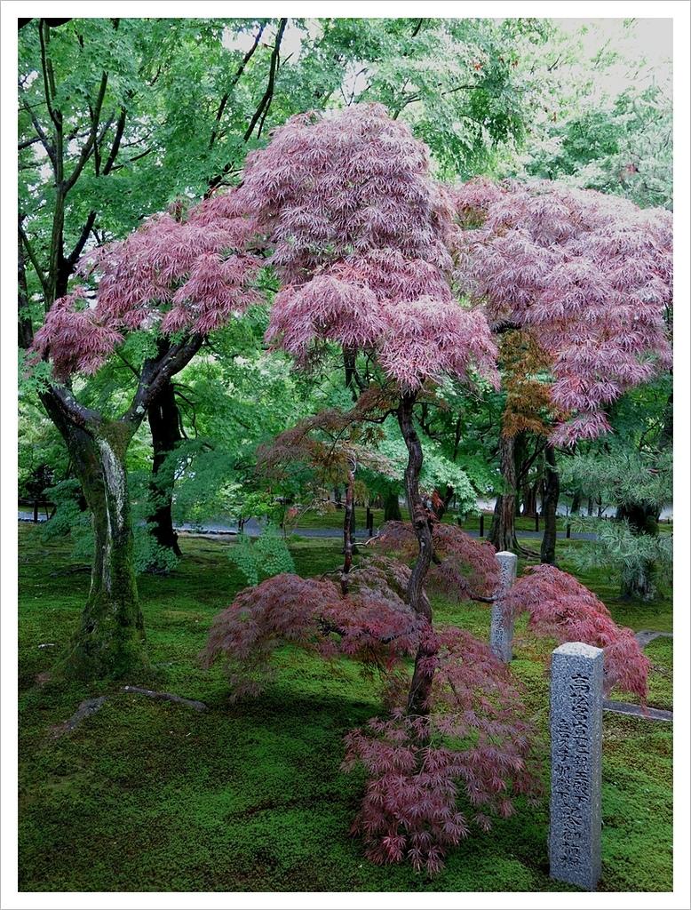 2017-06-21 東福寺:IMG_6877.JPG