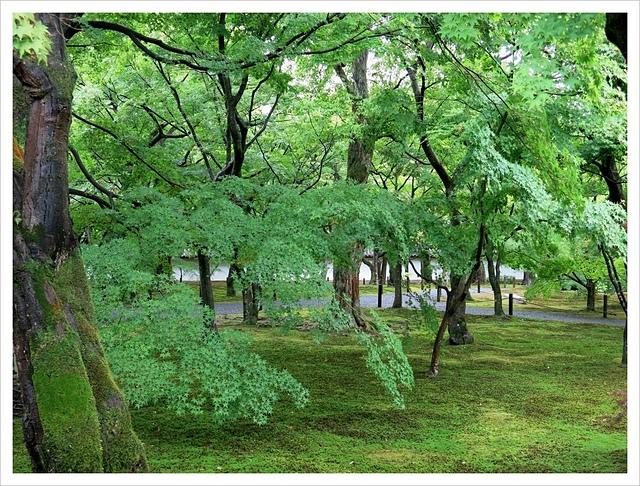 IMG_6864.JPG - 2017-06-21 東福寺