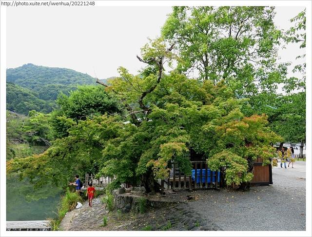 IMG_6393.JPG - 2017-06-18 嵐山-天龍寺-竹林
