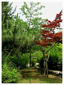 2017-06-17 圓山公園-八坂神社-祇園:IMG_6132.JPG