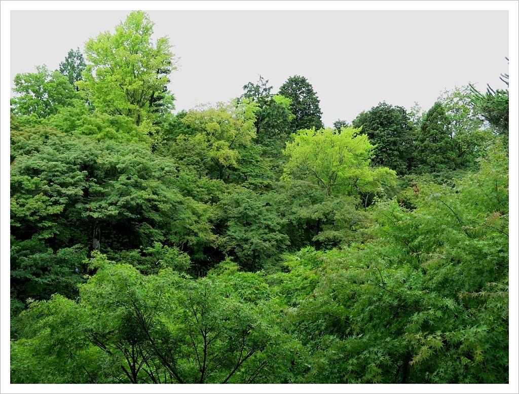 2017-06-21 東福寺:IMG_6909.JPG
