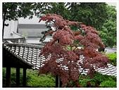 2017-06-21 東福寺:IMG_7020.JPG