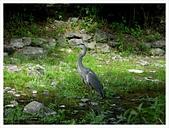 2017-06-17 圓山公園-八坂神社-祇園:IMG_6136.JPG