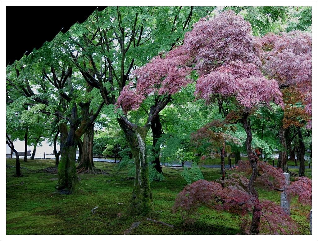 2017-06-21 東福寺:IMG_6879.JPG