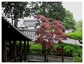 2017-06-21 東福寺:IMG_7021.JPG