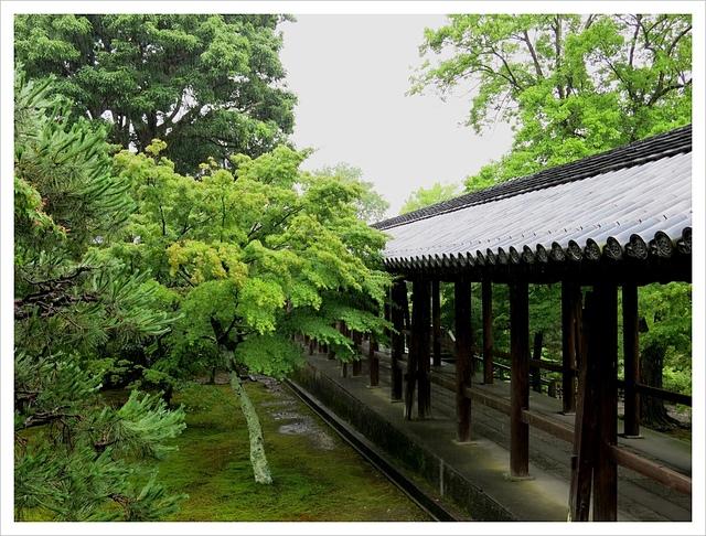 IMG_6958.JPG - 2017-06-21 東福寺