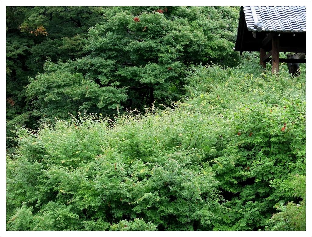 2017-06-21 東福寺:IMG_6894.JPG