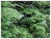 2017-06-21 東福寺:IMG_7067.JPG