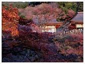2016-11-25 清水寺:IMG_3506.JPG