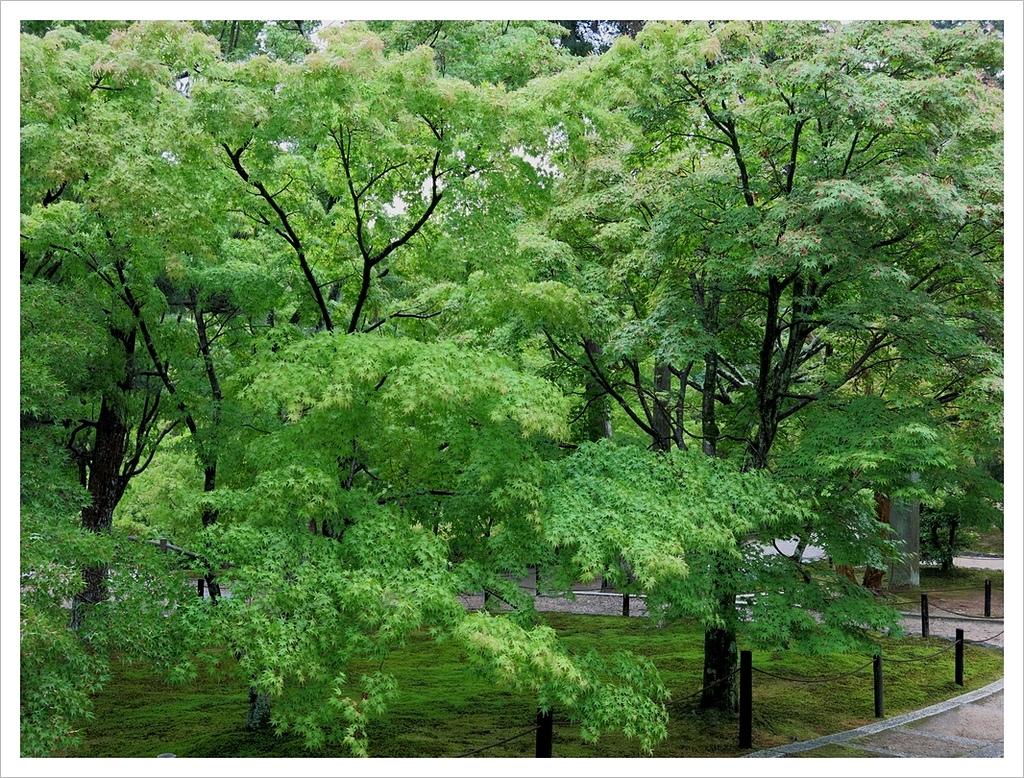 2017-06-21 東福寺:IMG_6947.JPG