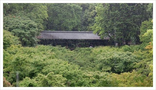 IMG_7044.JPG - 2017-06-21 東福寺